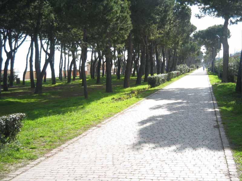 Pineto & Verde: messi a dimora sessanta nuovi pini