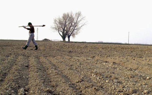 Marche&Siccità. La Regione verso lo stato di calamità per l'agricoltura