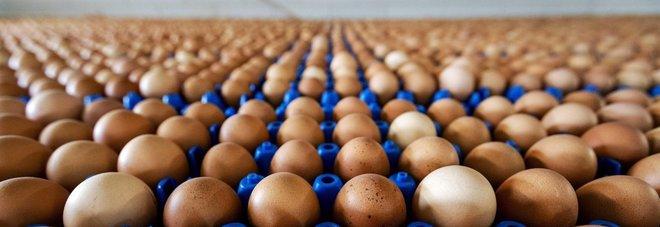 Uova contaminate: sequestri in un'azienda di Senigallia