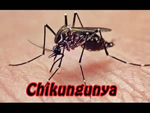 Punto da zanzara durante una vacanza: caso di Chikungunya nelle Marche