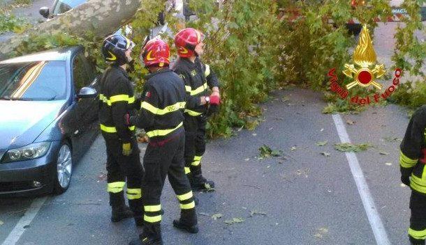 Maltempo. Forte vento nelle Marche: un albero si abbatte su un'auto. Illeso il conducente