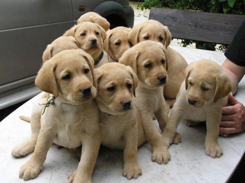 Tre marchigiani fermati dalla Polstrada per traffico di cuccioli di cane