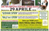 Canzano&Accademia degli asparagi selvatici. Gara di raccolta nella