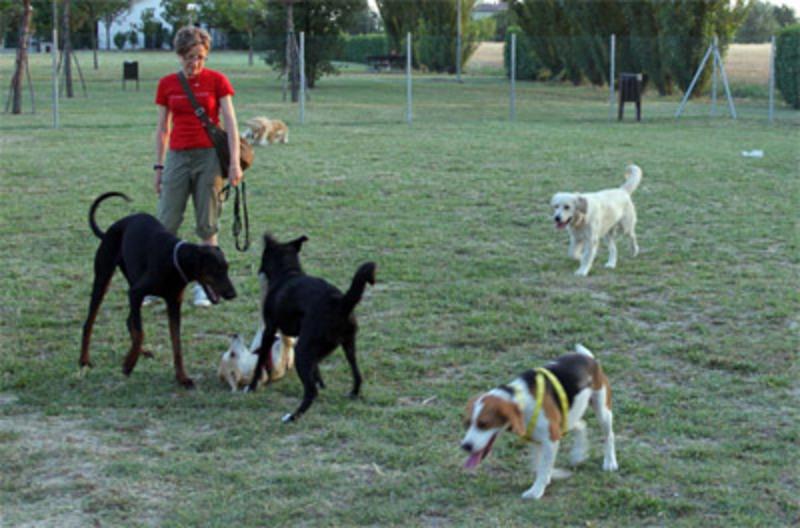 Pineto. La Giunta approva il progetto per l'area riservata ai cani