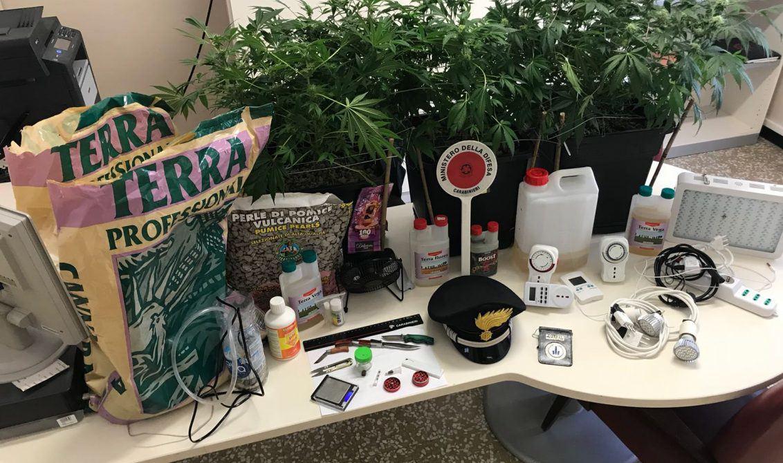 Aveva una serra di marijuana in casa: i Cc arrestano 28enne