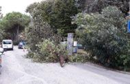 Pioggia battente continua: raffiche di vento,alberi spezzati e abbassamento della temperatura