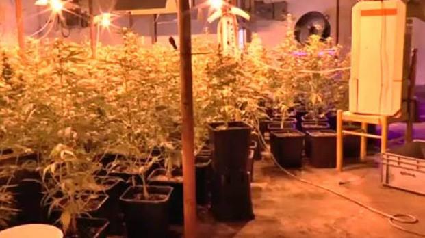Incendia piante di marijuana all'arrivo della Polizia. Scoperto altri 700 gr di stupefacente.Un  Arresto