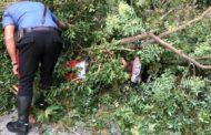 Cade un albero e finisce su un motociclista. Interviene l'eliambulanza