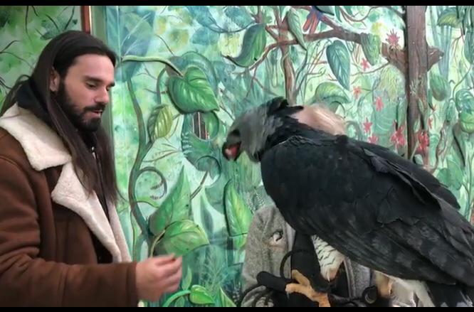 Il Falconiere abruzzese,Giovanni Granati, chiamato in America per un progetto innovativo sui rapaci